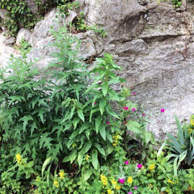 Kräuterwanderung Rosmarin&Ringelblume14 moonstone