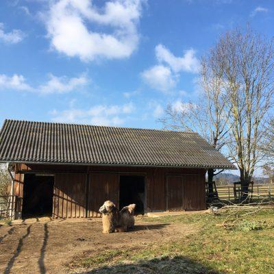 Tiergarten Walding, GoWithTheFlo24