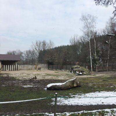 Tierpark Schmiding, GoWithTheFlo21