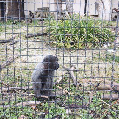 Tierpark Schmiding, GoWithTheFlo27