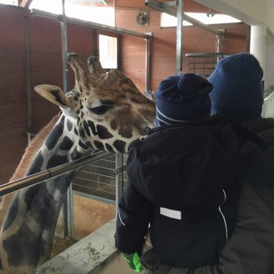 Tierpark Schmiding, GoWithTheFlo35