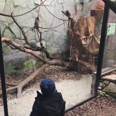 Tierpark Schmiding, GoWithTheFlo36