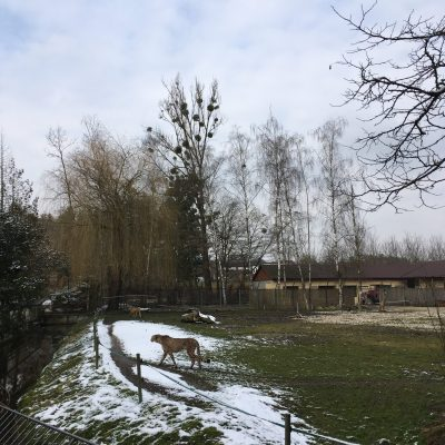 Tierpark Schmiding, GoWithTheFlo38
