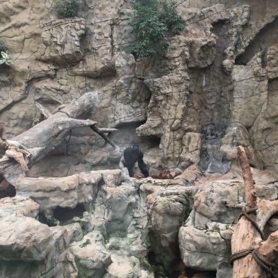 Tierpark Schmiding, GoWithTheFlo40